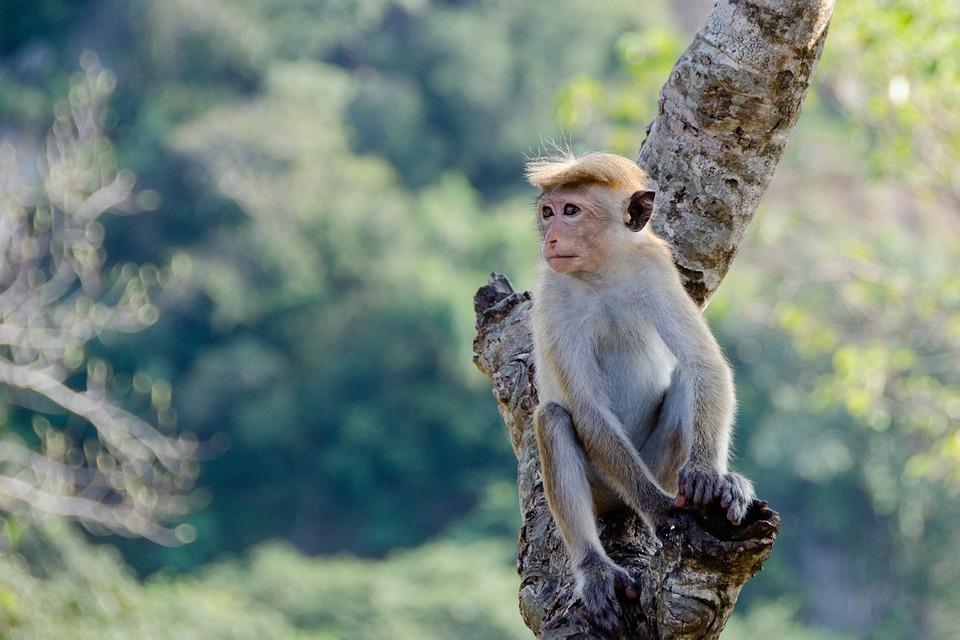 Alles ontdekken van Sri Lanka